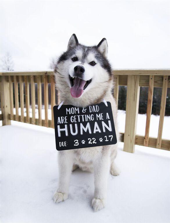 Pearhead Pet's Baby Announcement Chalkboard, Pet Announce Chalkboard