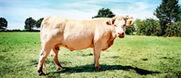 La belle nature des biftecks hachés bio Picard