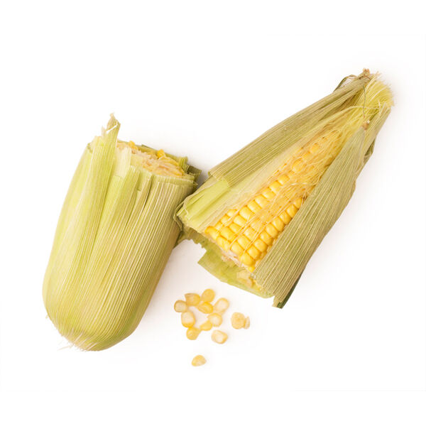 Image of Maize flour (Zea mays)
