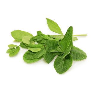 Mint (Mentha piperita) ingredient image