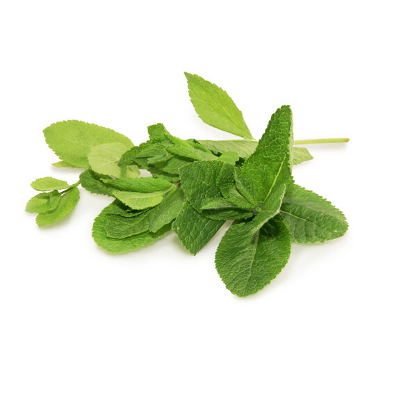 Image of Peppermint Oil (Mentha piperita)
