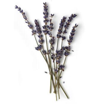 Lavender Oil (Lavandula augustifolia) ingredient image
