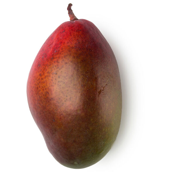 Image of Mango Butter (Mangifera indica)
