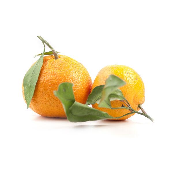 Image of Bergamot Oil (Citrus Aurantium bergamia)