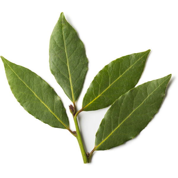 Image of Bay Leaf Infusion (Laurus Nobilis)