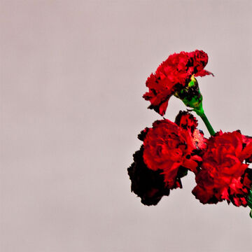 John Legend - Love In The Future - CD