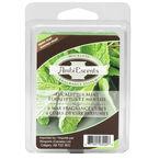 AmbiEscents Wax Cubes - Eucalyptus Mint - 6's