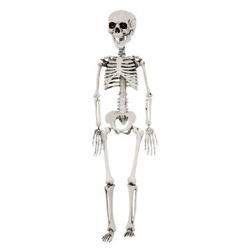 Halloween Realistic Skeleton Decoration - 30 inches