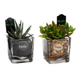 Tapered Glass with Plant - Assorted - 4inch