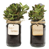 Mason Jar Planter - Assorted - 500ml