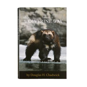 The Wolverine Way by Douglas Chadwick (Patagonia published paperback book), multi (multi-000)