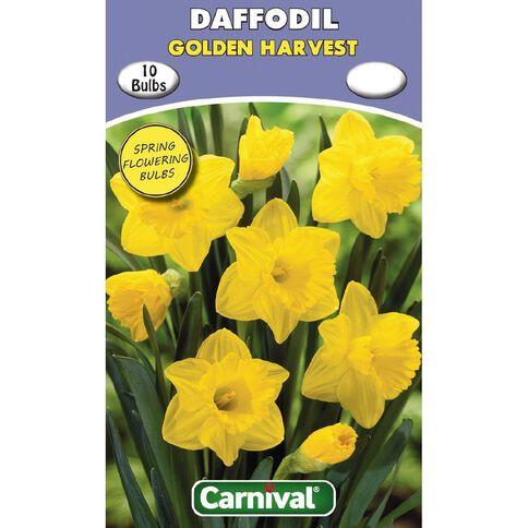 Carnival Daffodil Bulb Golden Harvest 10 Pack