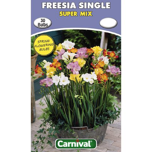 Carnival Freesia Single Bulb Super Mix 30 Pack