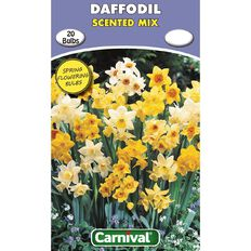 Carnival Daffodil Bulb Scented Mix 20 Pack
