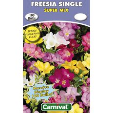 Carnival Freesia Single Bulb Super Mix 100 Pack