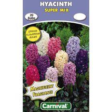 Carnival Hyacinth Bulb Super Mix 20 Pack