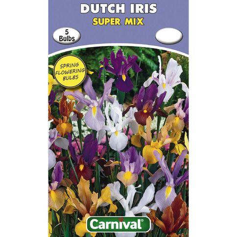 Carnival Dutch Iris Bulb Super Mix 5 Pack