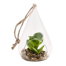Design House Hanging Succulent with Sand 16cm