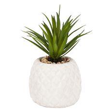 Living & Co Blanco Cement Succulent