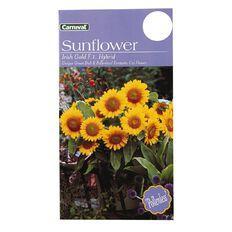 Carnival Irish Sunflower Flower Seeds