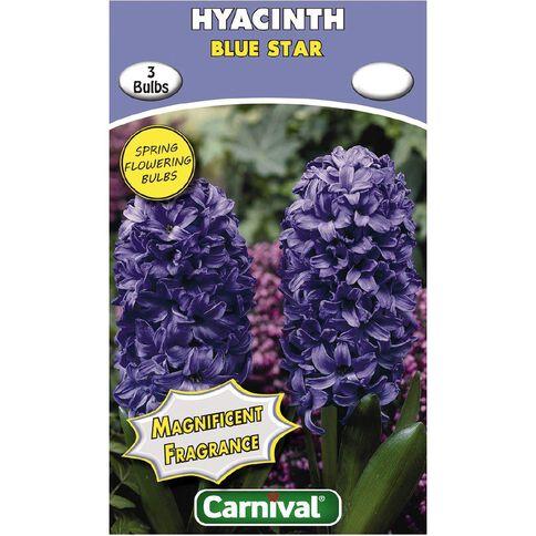 Carnival Carnival Hyacinth Bulb Blue Star 3 Pack