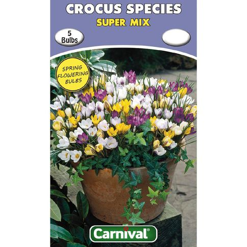 Carnival Crocus Bulb Super Mix 5 Pack