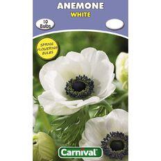 Carnival Anemone Bulb White 10 Pack