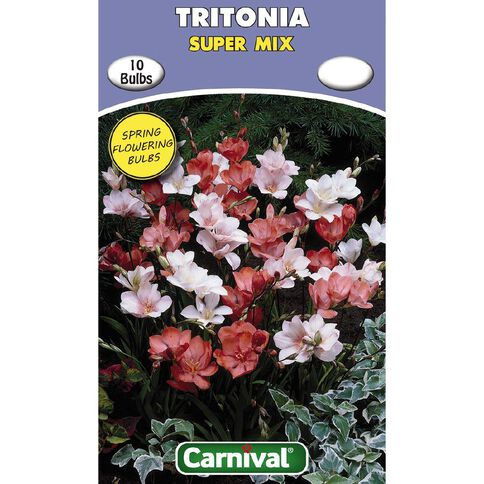 Carnival Tritonia Bulb Super Mix 10 Pack