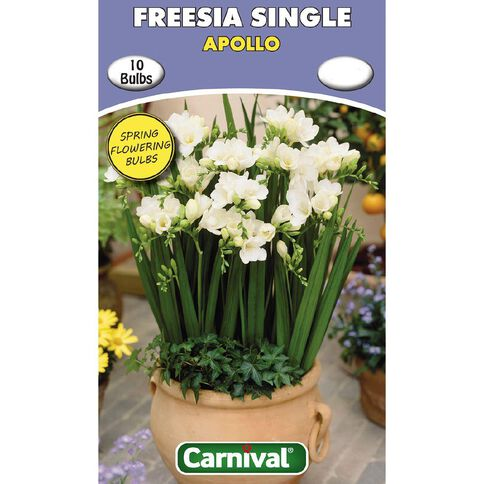 Carnival Freesia Single Bulb Apollo 10 Pack
