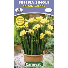 Carnival Freesia Single Bulb Golden Melody 10 Pack