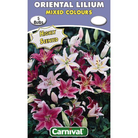 Carnival Oriental Lilium Bulb Mixed 5 Pack