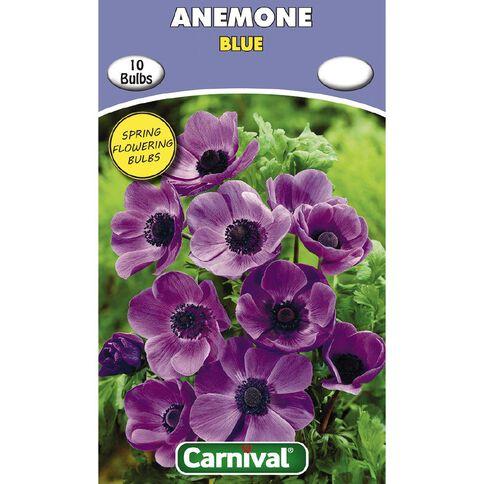 Carnival Anemone Bulb Blue 10 Pack