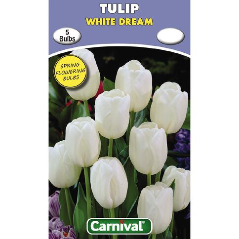 Carnival Tulip Bulb White Dream 5 Pack