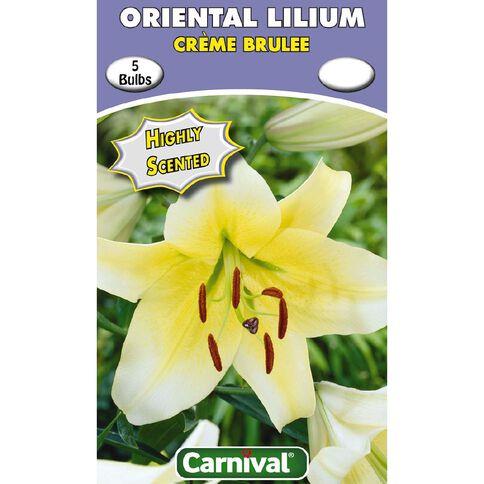 Carnival Oriental Lilium Creme Brulee 3 Pack