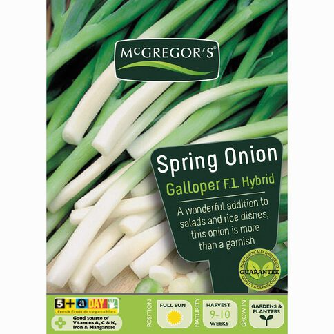 McGregor's Hybrid Galloper Spring Onion Vegetable Seeds
