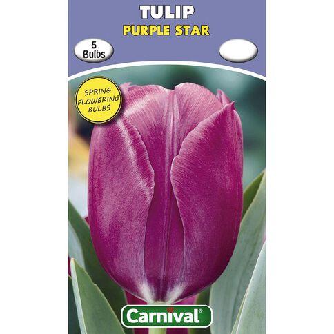 Carnival Tulip Bulb Purple Star 5 Pack