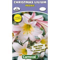 Carnival Christmas Flowering Lilium Bulb Regale 5 Pack