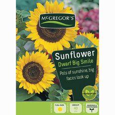 McGregor's Sunflower Big Smile Flower Seeds