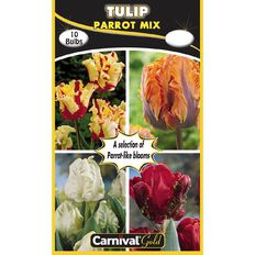 Carnival Gold Tulip Bulb Parrot Mix 10 Pack