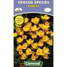 Carnival Crocus Bulb Sunkist 5 Pack