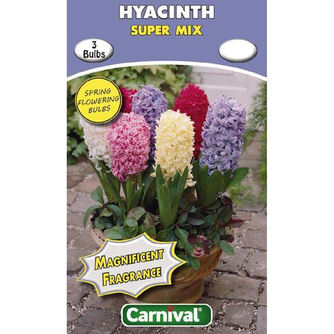 Carnival Hyacinth Bulb Super Mix 3 Pack