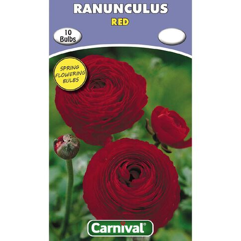 Carnival Ranunculus Bulb Red 10 Pack