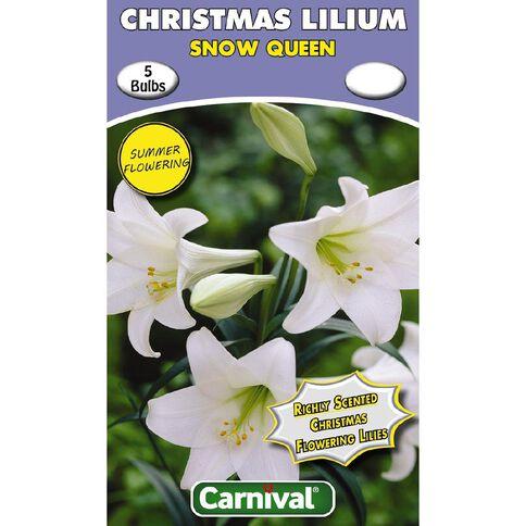 Carnival Christmas Flowering Lilium Bulb Snow Queen 5 Pack