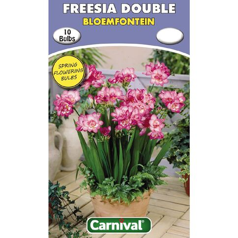 Carnival Freesia Double Bulb Bloemfontein 10 Pack