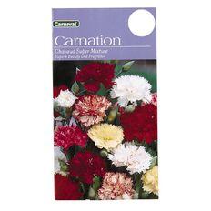 Carnival Chaubaud Flower Seeds