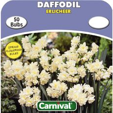 Carnival Daffodil Bulb Erlicheer 50 Pack