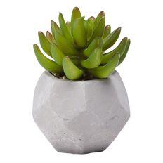 Living & Co Succulent Cement Pot 12cm