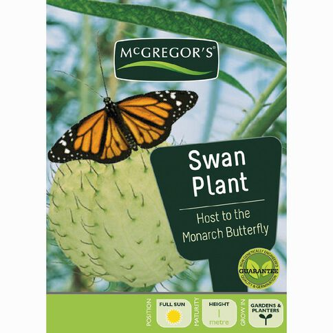 McGregor's Swan Plant Flower Seeds