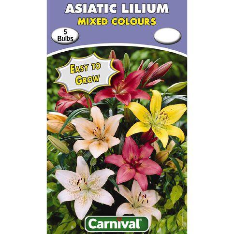 Carnival Asiatic Lilium Bulb Mixed 5 Pack