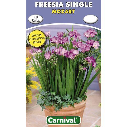 Carnival Freesia Single Bulb Mozart 10 Pack